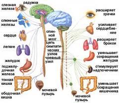 Вегето-судинна дистонія (ВСД)