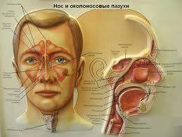 Гайморит симптоми, лікування, запобігання